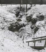 Karvės ola žiemą